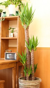 観葉植物イメージ2