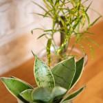 観葉植物イメージ4