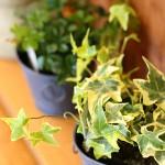 観葉植物イメージ6