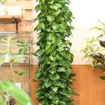 観葉植物イメージ1