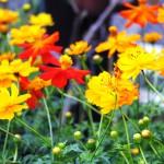 江南市の花屋アイビーの花苗