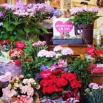 江南市の花屋アイビー