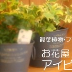 お花屋アイビーオンラインショップ