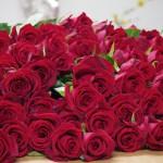 赤薔薇「サムライ08」